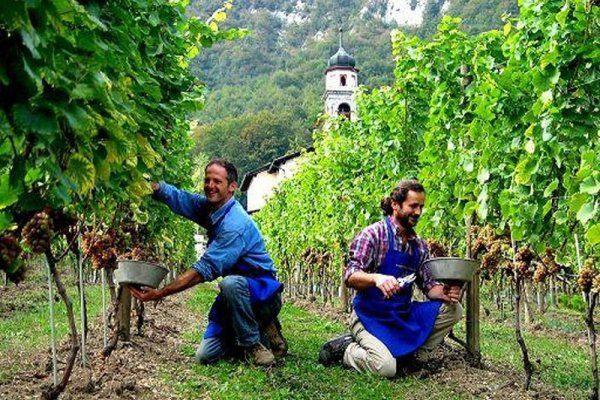 Сезонные работы в Италии