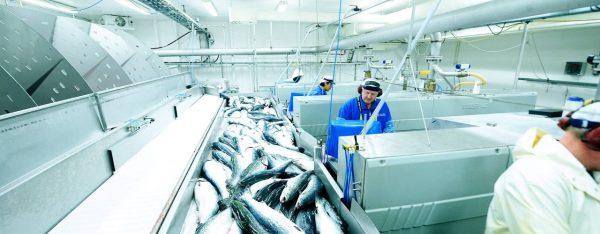 Цех рыбообработки