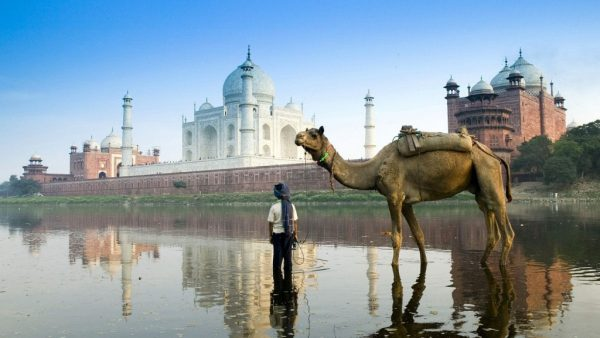 Погонщик верблюда на фоне Тадж-Махала