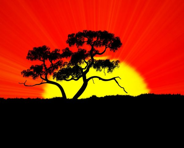 Рассвет на фоне дерева