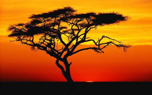 Баобаб на фоне заката