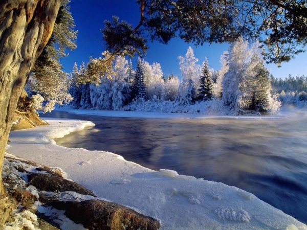 Деревья в инее возле реки