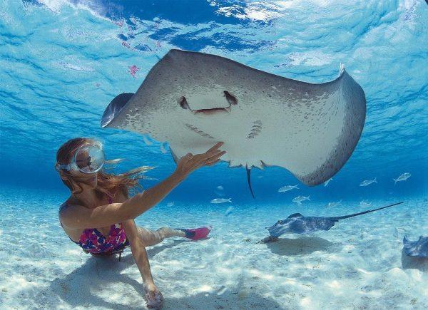 Девушка играет со скатом под водой