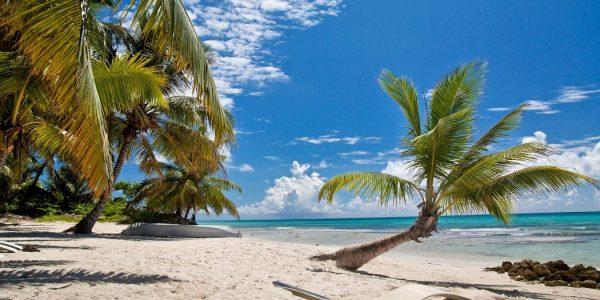 Пальмы на побережье