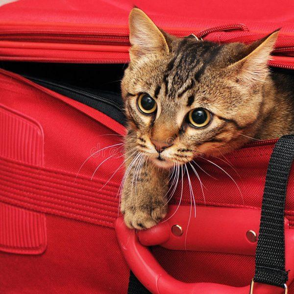Котёнок в чемодане