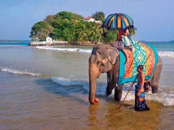 Слон с погонщиком на фоне небольшого острова