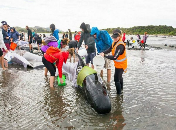 Волонтёры спасают дельфинов