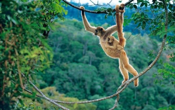 Фауна Бразилии