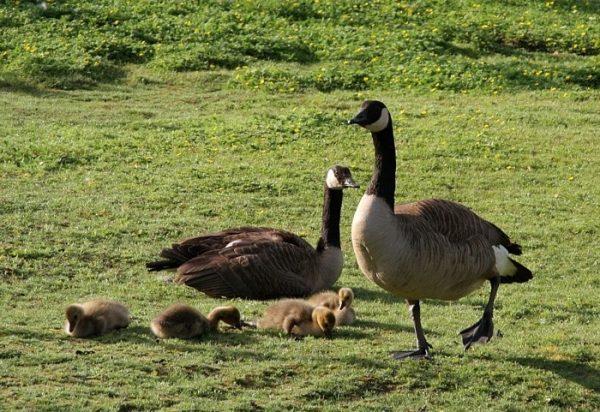 Птичий парк Яанираоту
