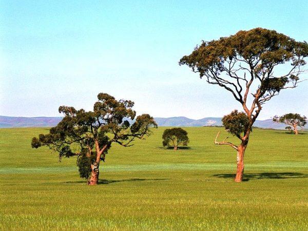 Саванна в Австралии