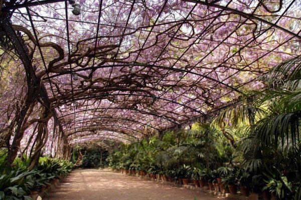 Ботанический сад Ла-Консепсьон в Малаге