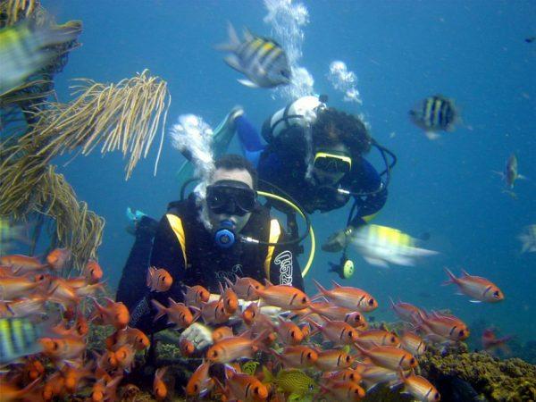 Погружение с аквалангом — дайвинг
