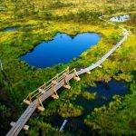 Дорожка через болото в парке Лахемаа