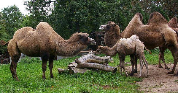 Каунасский зоопарк
