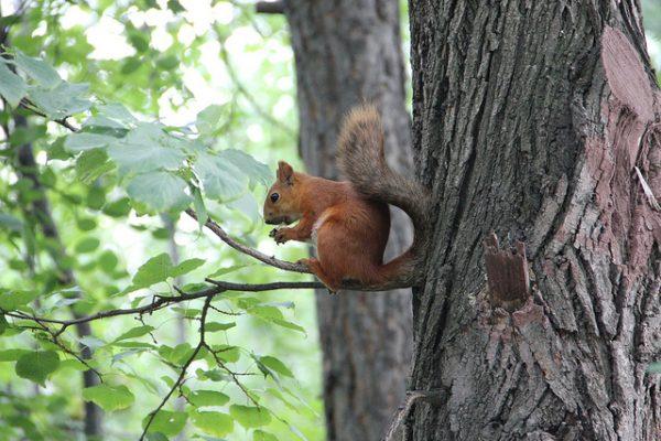 Новосибирский зоопарк летом