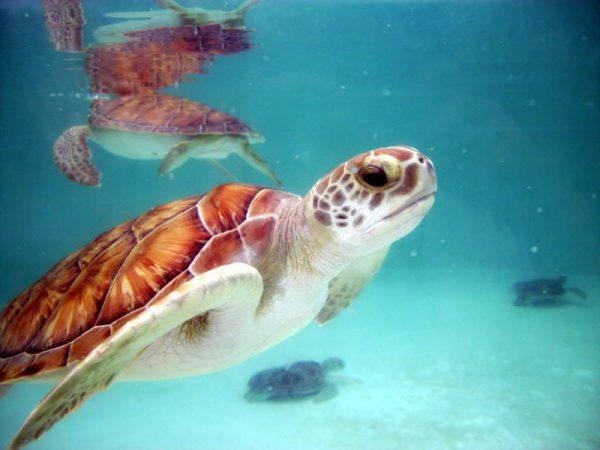 Остров черепах на Кубе