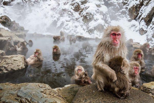 Парк обезьян в Дзигокудани