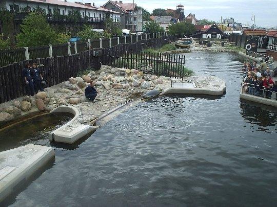 Питомник балтийских тюленей в Стрыш-Буде
