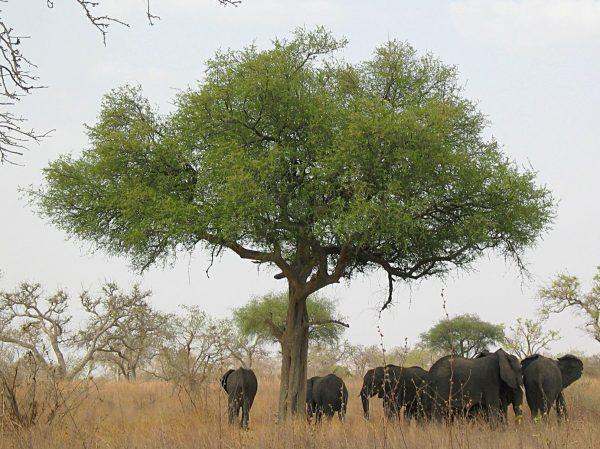 Слоны в парке Ваза
