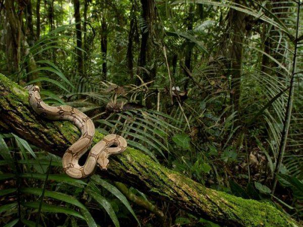 Тропический девственный лес