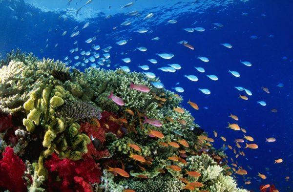 Вид на подводную часть Большого Барьерного рифа