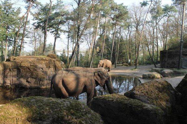 Зоопарк в Арнеме