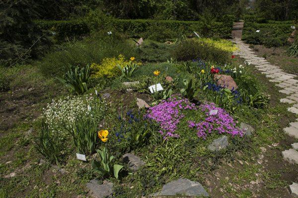 Ботанический сад в Бишкеке
