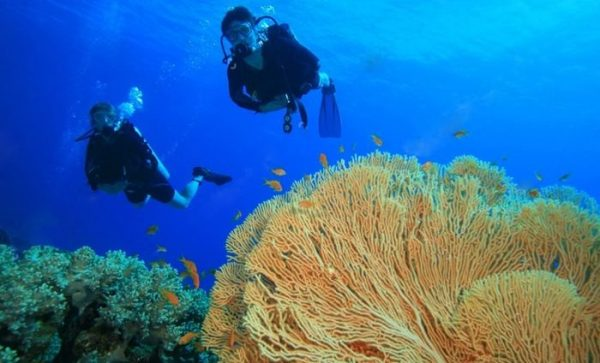 Дайвинг в водах острова Родригес