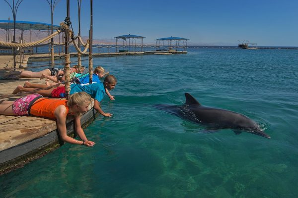 Дельфиний риф в Израиле