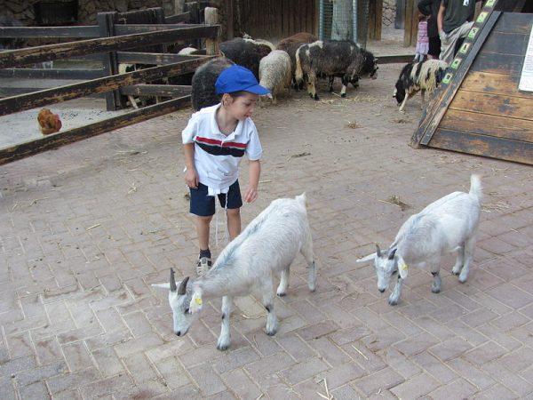 Детский уголок в Иерусалимском библейском зоопарке