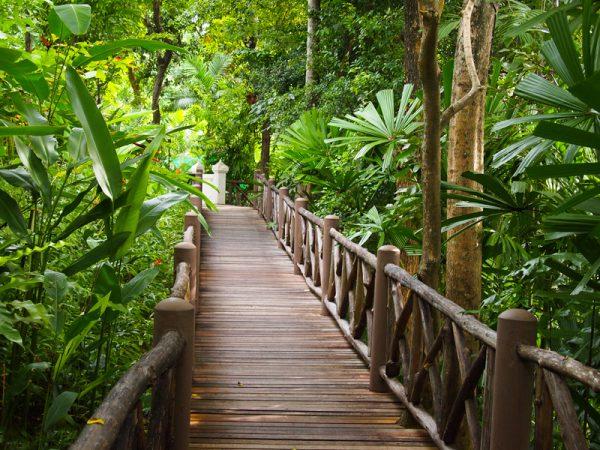 Лес в Таиланде