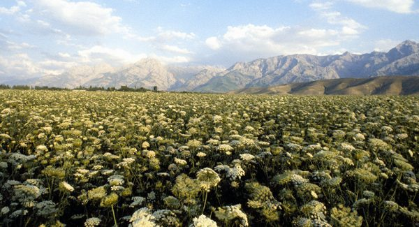 Ферганская долина Таджикистана