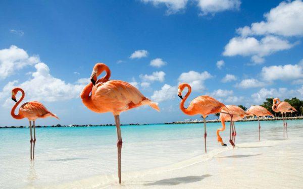 Фламинго на острове Джерба