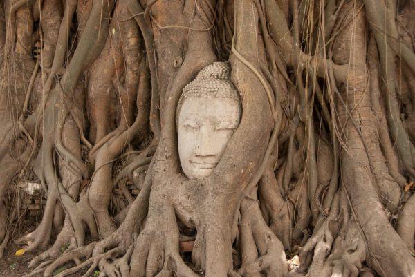 Голова Будды в Ват Махатхате