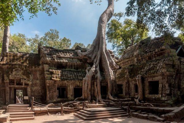 Храм Та Прум в Ангкоре