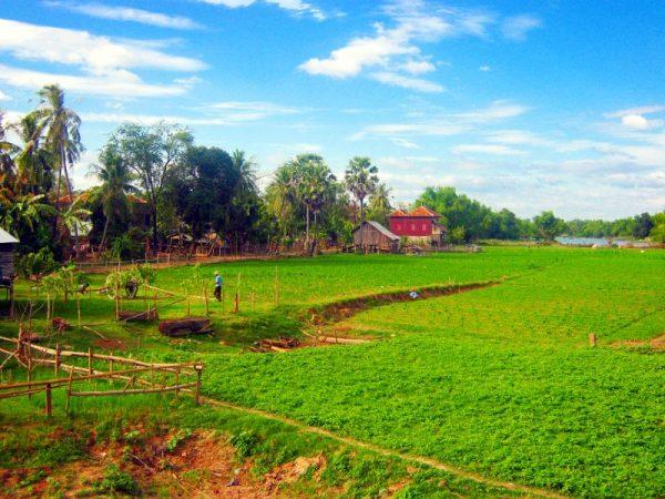 Сельхозполя в Камбодже