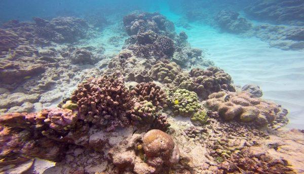 Коралловые рифы около атолла Нуну