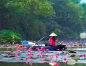 Лотосовая плантация во Вьетнаме