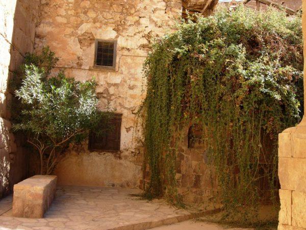 Неопалимая купина в монастыре Св.Екатерины