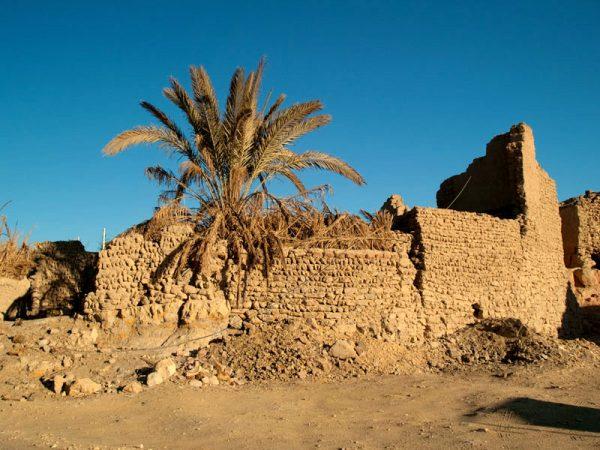 Оазис в Западной пустыне Египта