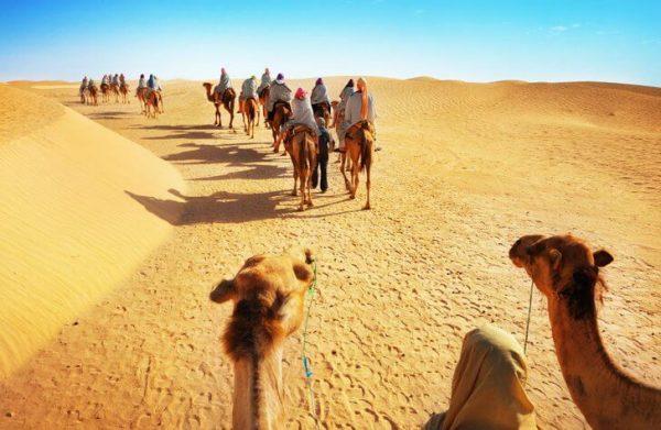 Передвижение на верблюдах по пустыне Сахара