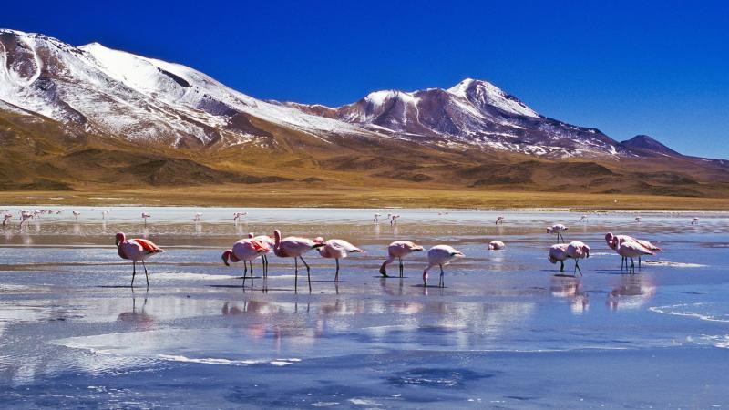 Интересное в Боливии: достопримечательности и варианты путешествий