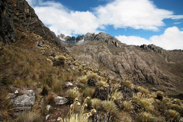 Пейзаж в национальном парке Сьерра-Невада в Венесуэле