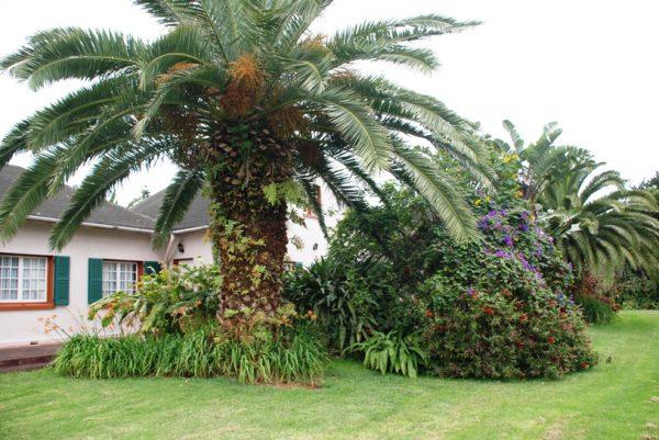 Сад возле резиденции