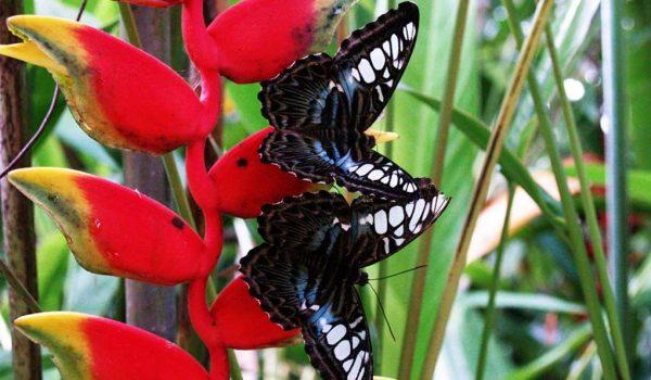 Тропический парк бабочек на Самуи