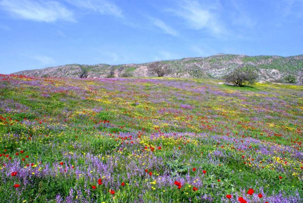 Весна в горах Таджикистана