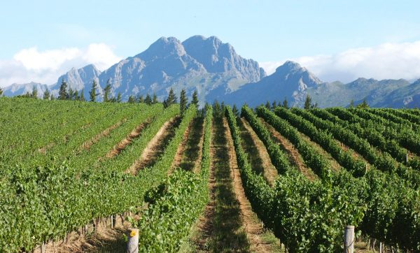 Виноградники ЮАР