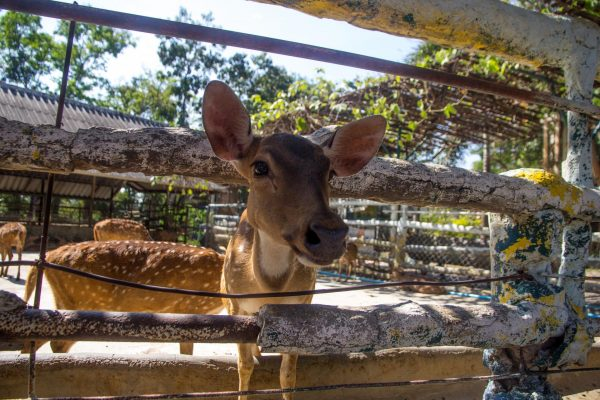 Животные из зоопарка на острове Гренада