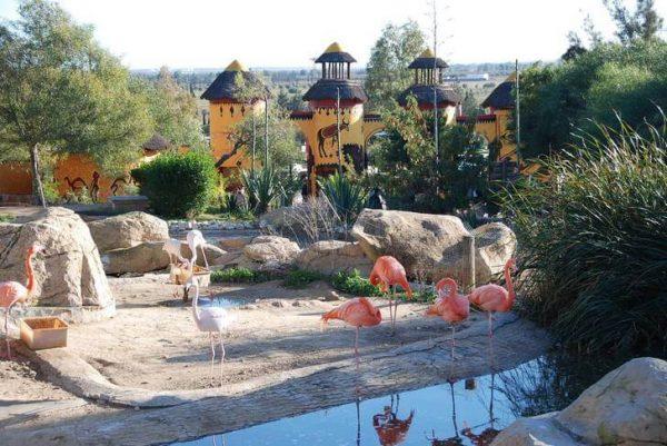 Зоопарк Фригия в пригороде Хаммамета