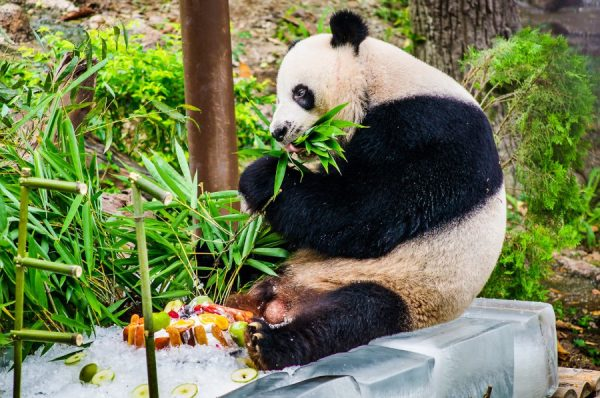 Зоопарк Чиангмай